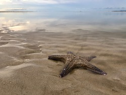 Dead starfish on a beach when tide is falling. Starfish at Nai Yang beach in Phuket island, Thailand