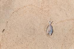 Dead tiny fish on sand beach