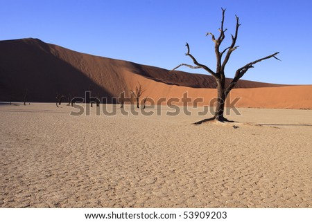 Dead tree and dunes at Dead Vlei in Namibia