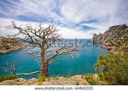 Dead tree and sea