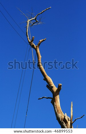 Dead tree branch supported by iron wire