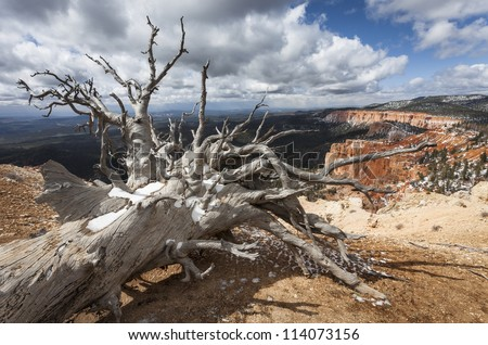 Dead tree, Bristlecone Loop, Bryce Canyon, Utah, USA