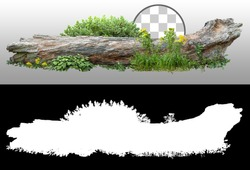 Dead tree fallen and lying on the ground. Cutout tree trunk surrounded by flowers. Garden design isolated on transparent background. Flowering shrub and green plants for landscaping. Flowerbed.
