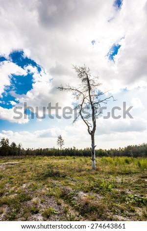 Dead tree in the sun in the bare field