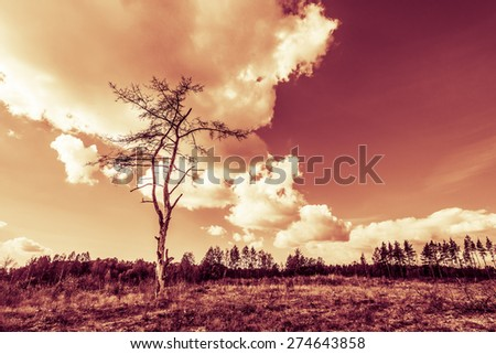 Dead tree in the sun in the bare field. Image in the yellow-red toning