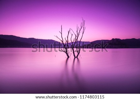 dead tree in the swamp during the wintry sunset #1174803115