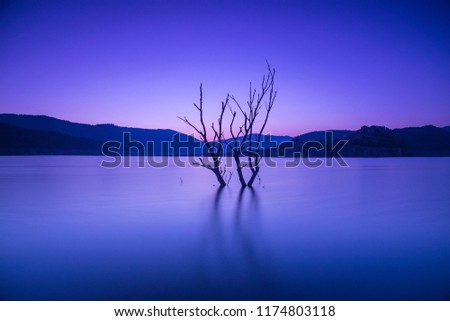 dead tree in the swamp during the wintry sunset #1174803118
