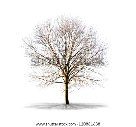 Dead tree isolated on a white background in high resolution