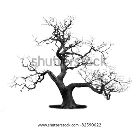 Dead tree isolated on white