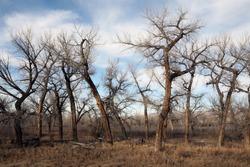 Dead tree landscape in late sun - rural Wyoming