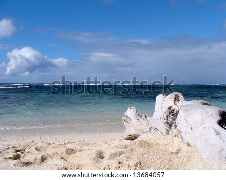 dead tree on the beach in mauritius