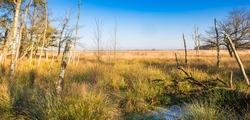 Dead tree stems in the Noordsche Veld nature reserve in Drenthe, Netherlands