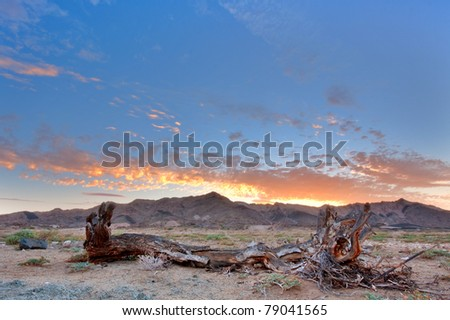 dead tree stump trunk at dusk in the Ai-Ais Richtersveld Transfrontier Park in South Africa