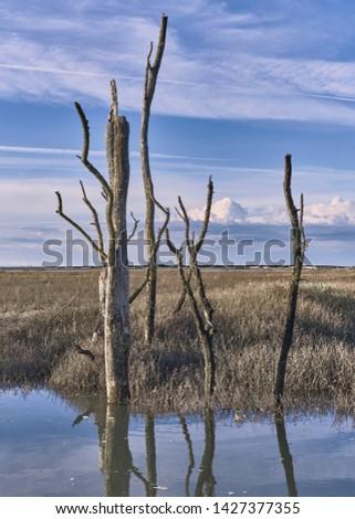 Dead tree stumps flooded farmland climate change portrait format