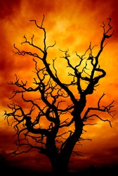 dead tree with a surreal scary red and orange sky for Halloween