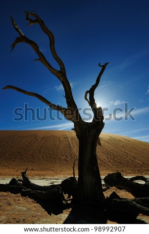 Dead tree with back-light in Sossuvlei.