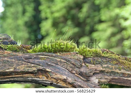 Dead tree with moss