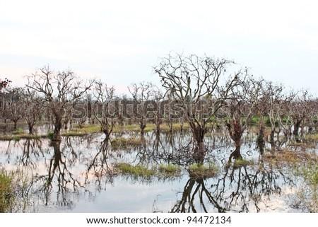 Dead trees and flood