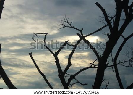 Dead trees and gloomy skies #1497690416