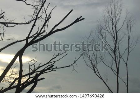 Dead trees and gloomy skies #1497690428