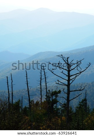 dead trees and layers of back lit mountains