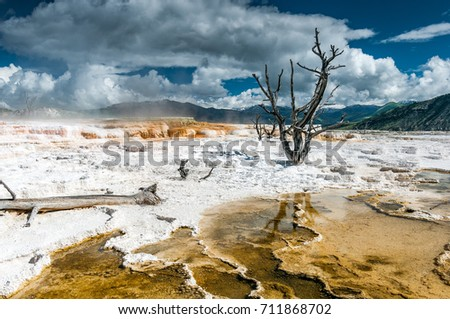 Dead trees and Mammoth Hot Springs travertine concretions in Yellowstone National Park