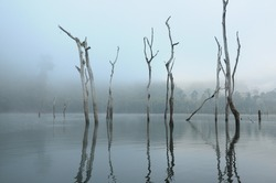 Dead trees and the mist in the lake of Khao Sok, the South of Thaialand