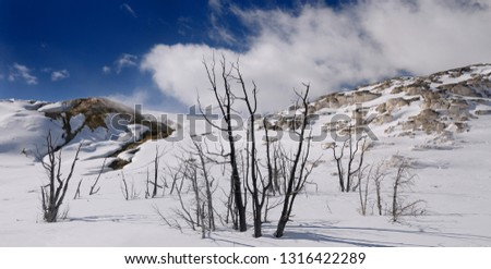Dead trees at active Jupiter and quiet Mound Terrace at Mammoth Hot Springs Yellowstone Park