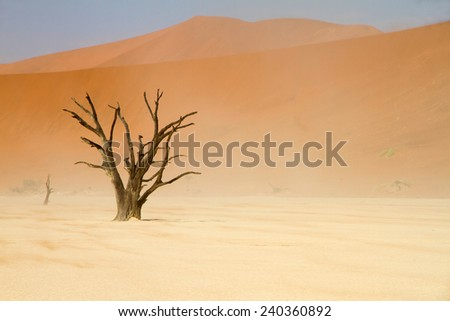 Dead trees between the red dunes of Sossusvlei desert, Namibia