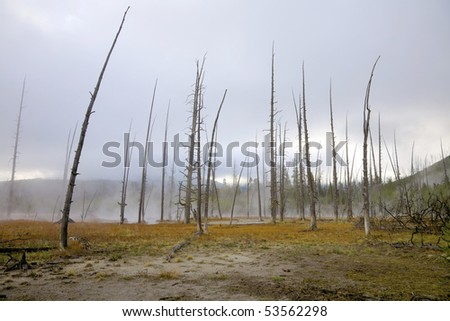 Dead trees caused by sulphuric soil condition in a geothermal area, Yellowstone National Park, Wyoming, United States.
