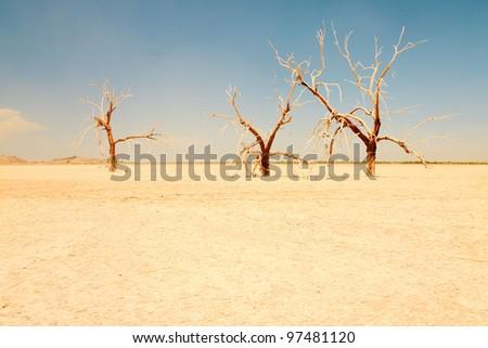 Dead trees in dry landscape near salton sea. USA.