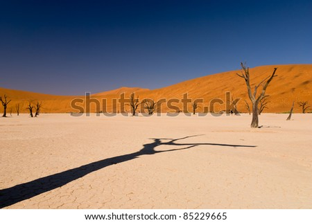 Dead trees in Namib desert with shadow and sand dunes