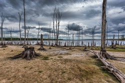 Dead Trees in the forest around a lake with low water levels. This photo depicts drought conditions and Climate Change. Location is Manasquan Reservoir, New Jersey.
