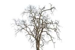 Dead trees isolated on white background