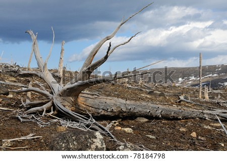 Dead trees near to metallurgical factories. Consequences of adverse ecological conditions.