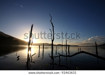 Dead trees on a water dam in the morning light