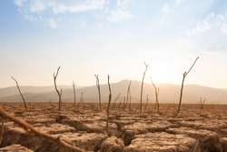 Dead trees on drought and cracked land at dry river or lake, metaphor climate change, global warming and water crisis at africa or ethiopia