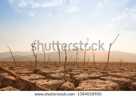 Dead trees on drought and cracked land at dry river or lake, metaphor climate change, global warming and water crisis at africa or ethiopia Сток-фото ©