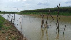 dead trees sinking in canal