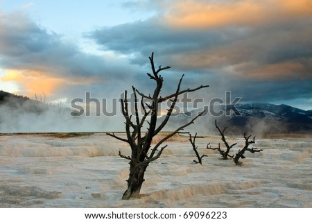 Dead trees stand over the terraces at Mammoth Hot Springs during a fall sunset.