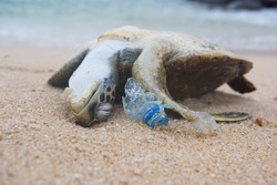 Dead turtle and plastic bottle garbage from ocean on the beach