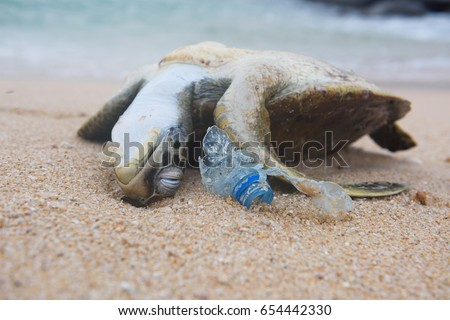 Dead turtle and plastic bottle garbage from ocean on the beach #654442330