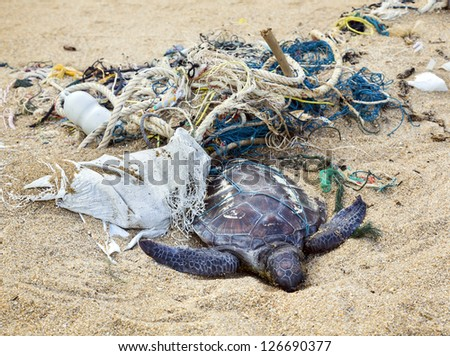 Dead turtle entangled in fishing nets on the sand