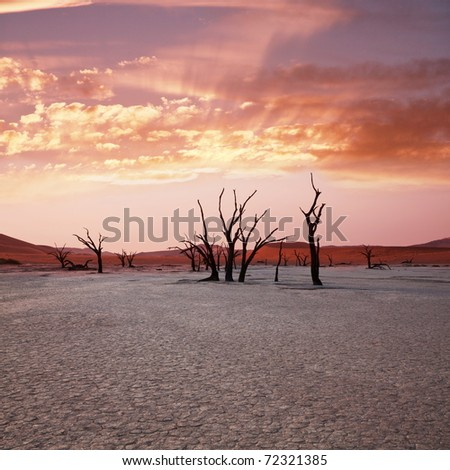Dead valley in Namibia at dark