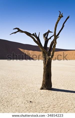 Dead Vlei, Namib Desert, Namib-Naukluft National Park, Republic of Namibia, Southern Africa