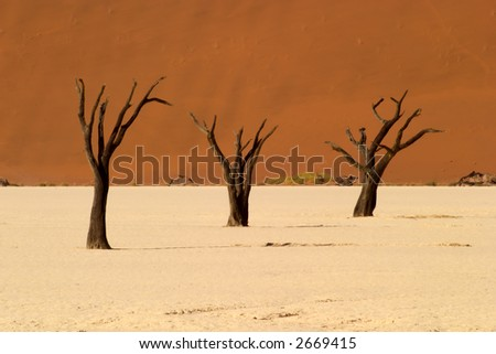 Dead vlei valley close to Sossusvlei in Namibia