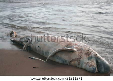 Dead whale washes ashore