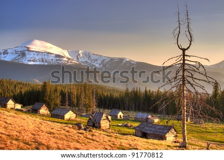 Dead wood and old houses in the Carpathian Mountains of Ukraine