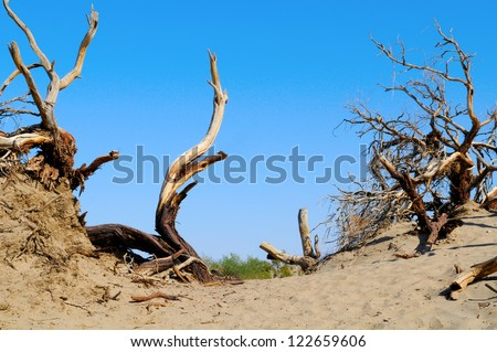 Dead Wood in Death Valley, Nevada, US