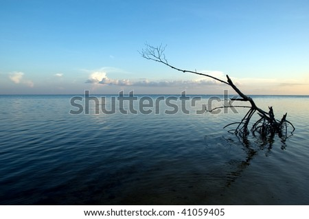 Dead wood still standing in the sea